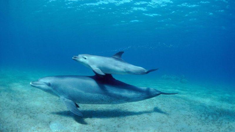 Datos curiosos sobre los delfines - delfin-y-su-cria