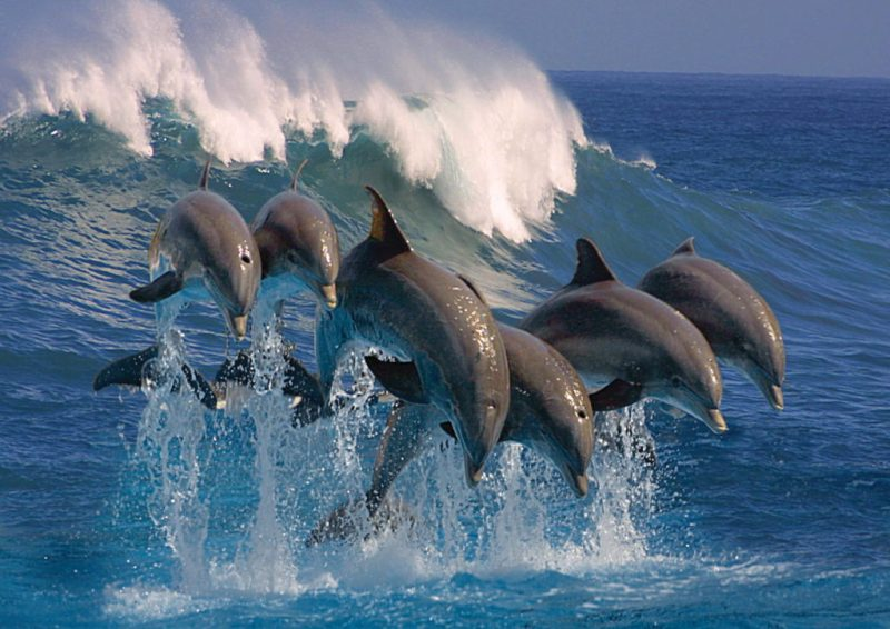 Datos curiosos sobre los delfines - delfines-2
