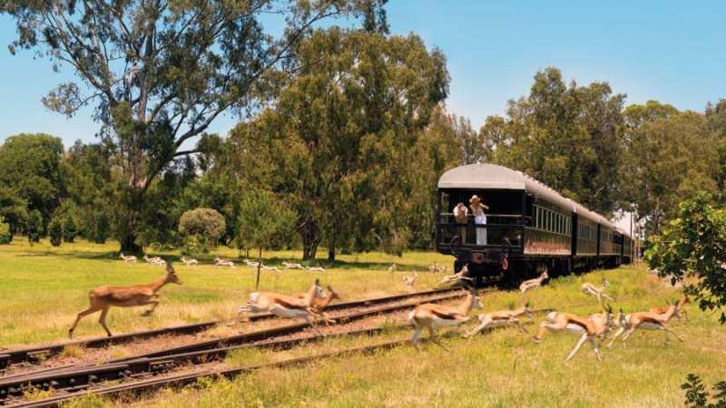 Los viajes en tren más impresionantes del mundo - viajes-en-tren-rovos-5