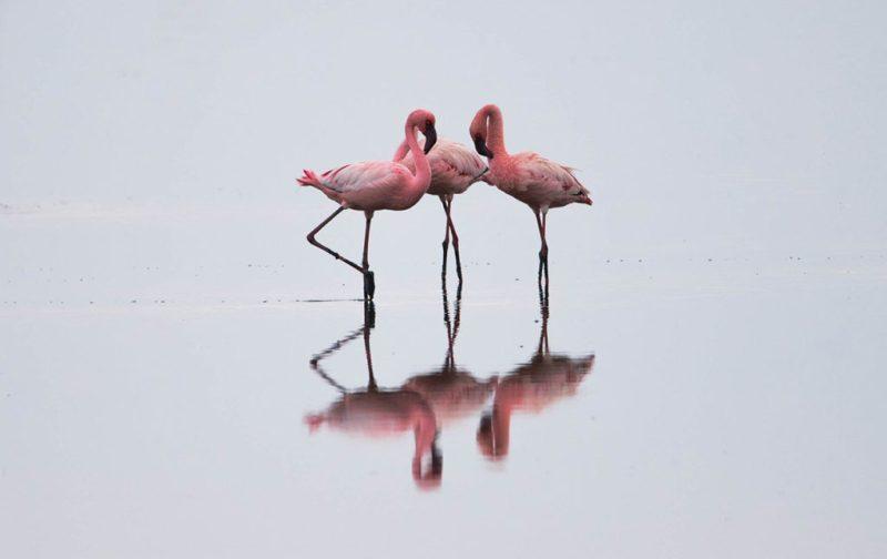 Diego Rodríguez: el fotógrafo que captura momentos en la naturaleza - flamingos-foto-reflejo-agua