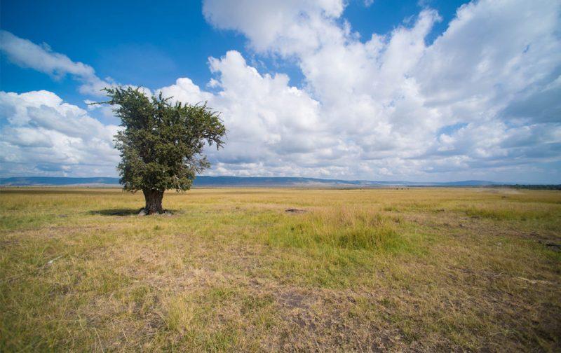 Diego Rodríguez: el fotógrafo que captura momentos en la naturaleza - paisaje-arbol-cielo-pasto