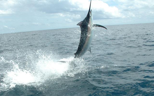 Actividades diferentes que puedes hacer en Acapulco - pesca-en-acapulco