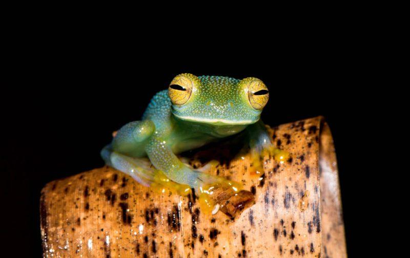 Diego Rodríguez: el fotógrafo que captura momentos en la naturaleza - rana-foto-animal