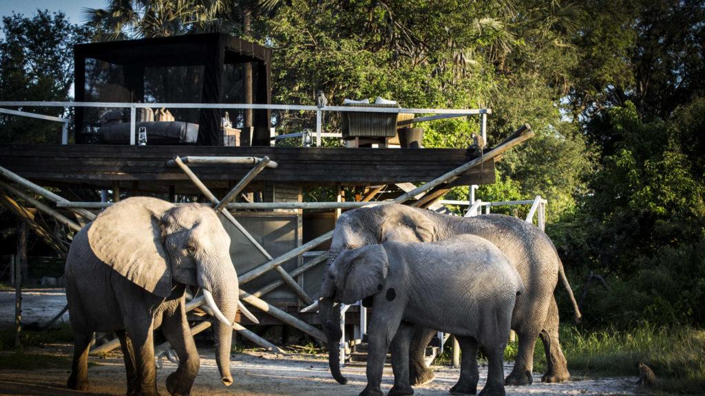 Abu Camp, el campamento ideal para los amantes de los elefantes - Hotbook Abu Camp, el campamento ideal para los amantes de los elefantes 3