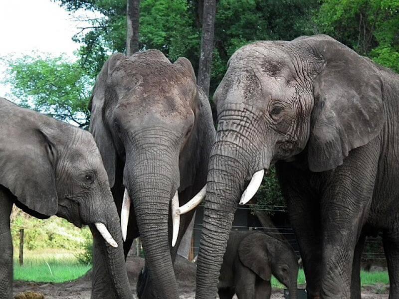 Abu Camp, el campamento ideal para los amantes de los elefantes - hotbook-abu-camp-el-campamento-ideal-para-los-amantes-de-los-elefantes-5