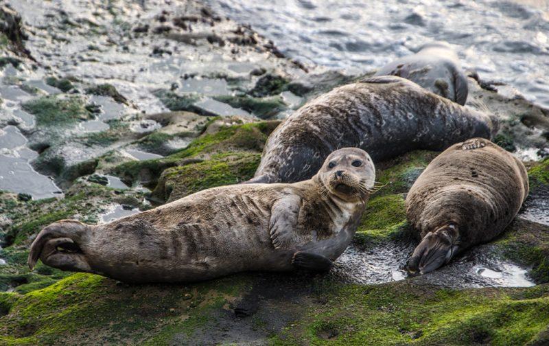 San Diego a la redonda: contrastes del sur de California - focas-animal-san-diego-naturaleza