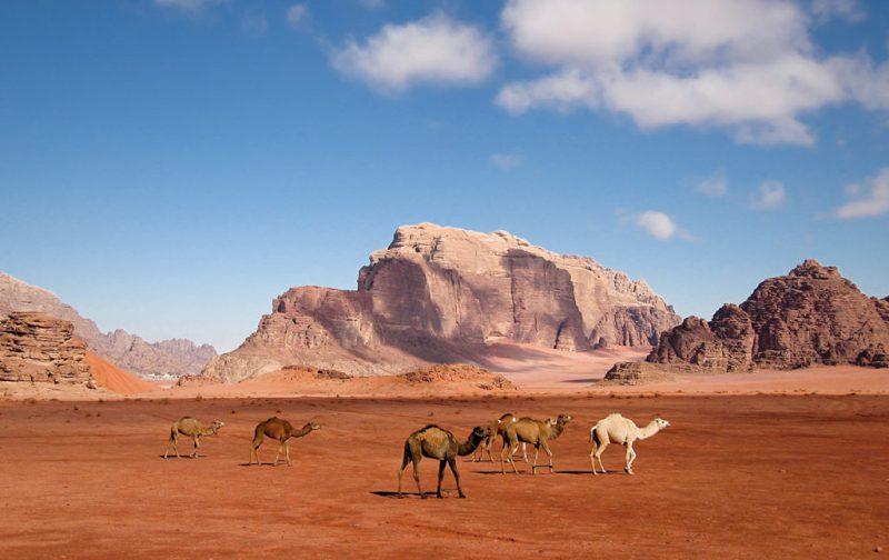 Sun City Camp, un campamento en el desierto - desierto-camellos-cielo