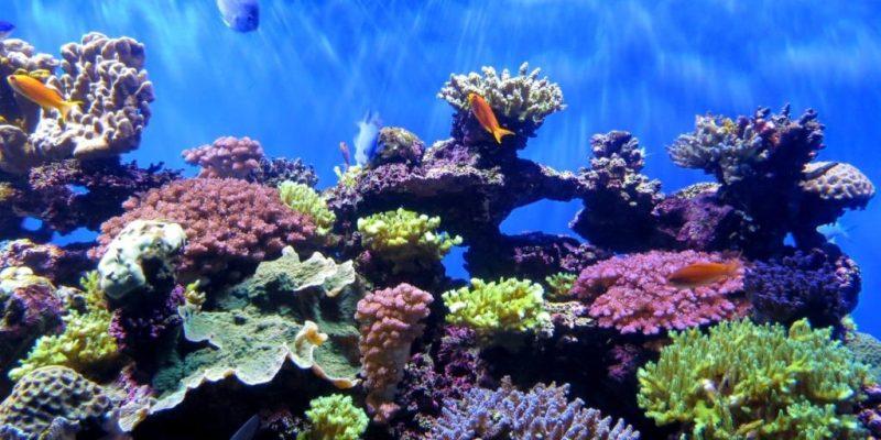 Día de la Tierra: protejamos nuestras especies - earth-day-3