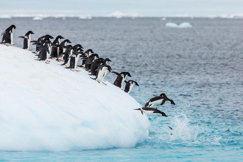 Datos curiosos sobre los pingüinos - hotbook-datos-curiosos-sobre-los-pingucc88inos-1