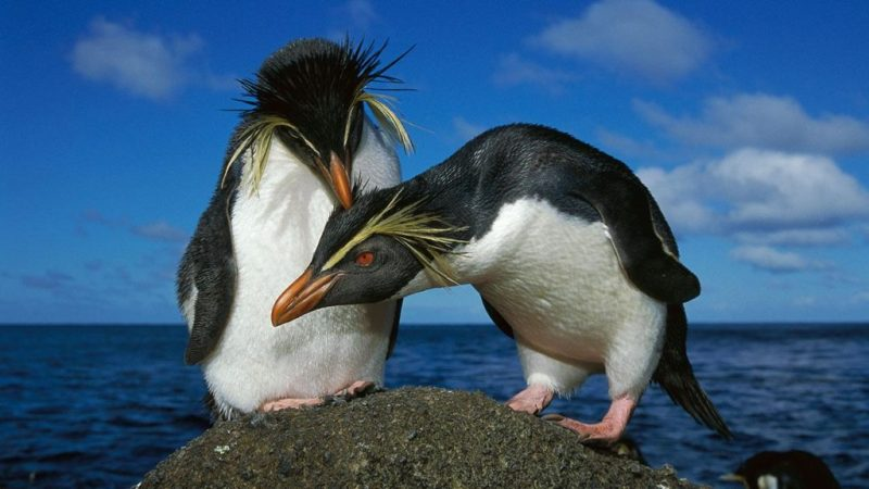 Datos curiosos sobre los pingüinos - hotbook-datos-curiosos-sobre-los-pingucc88inos-4