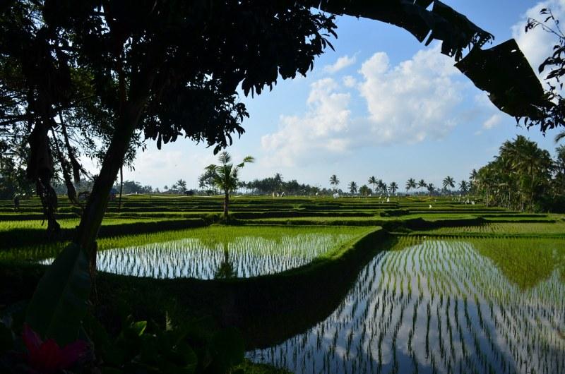 Guía para visitar Ubud, Bali - guiaubud_cuandoir