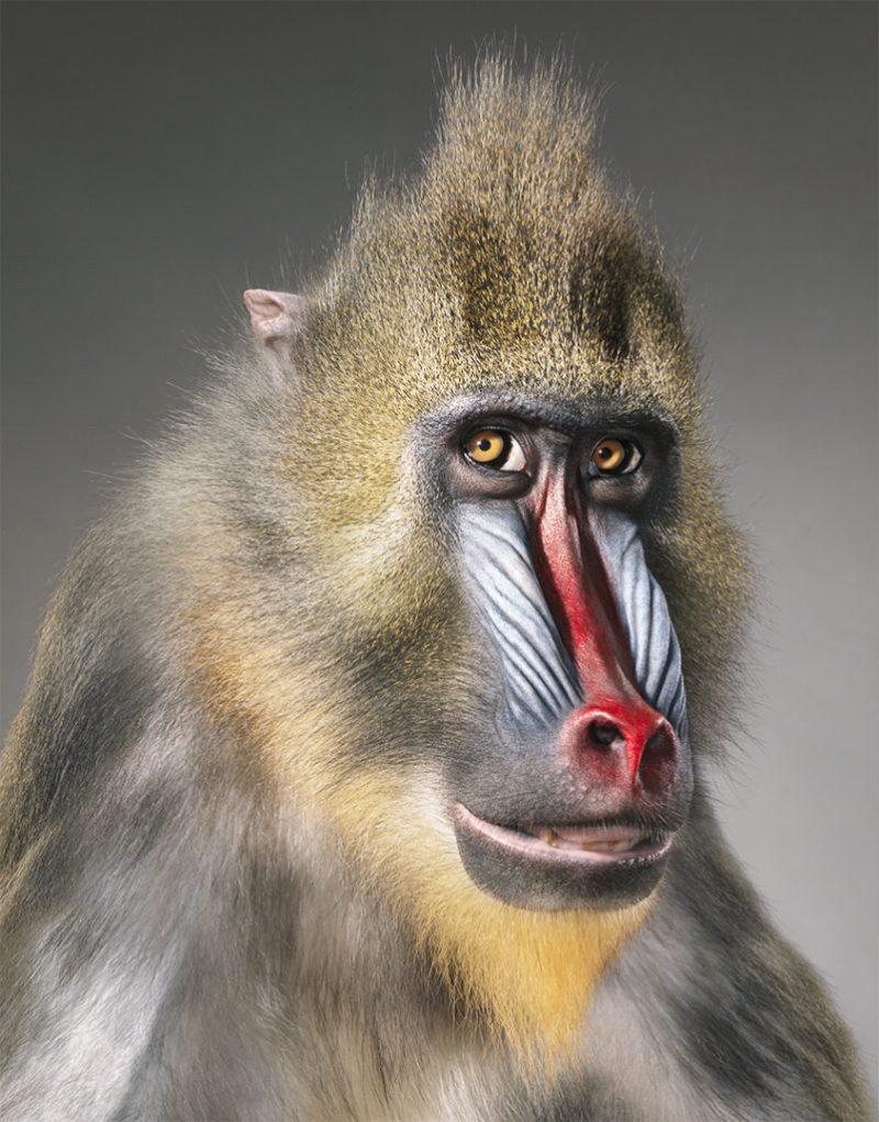 Tim Flach, el fotógrafo que crea conciencia sobre las especies en peligro de extinción - hotbook_timflach_3