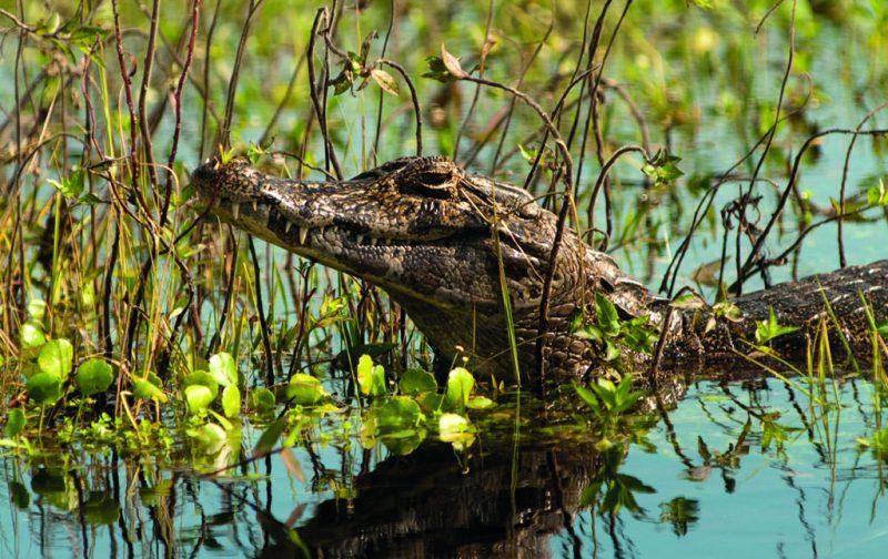 Esteros del Iberá, la nueva joya del conservacionismo - esteros-del-ibera-1