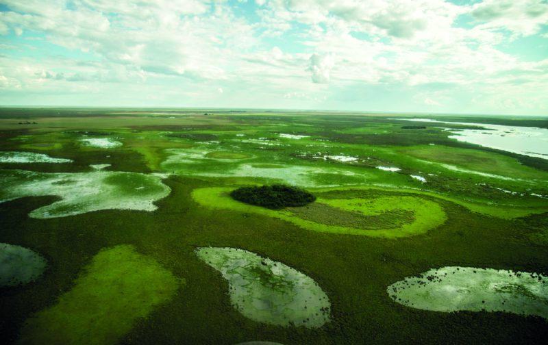 Esteros del Iberá, la nueva joya del conservacionismo - esteros-del-ibera-5