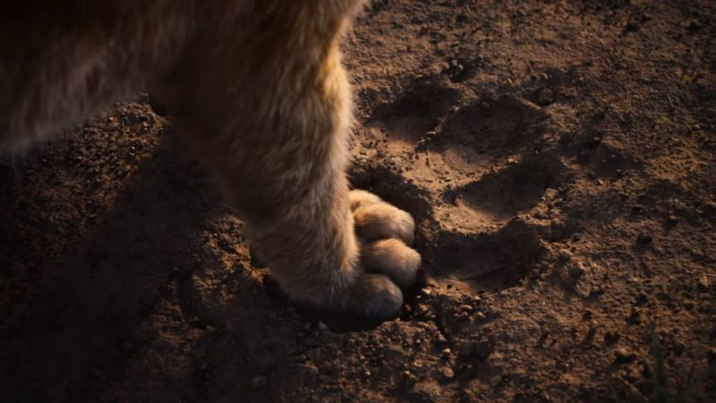 Lo que necesitas saber sobre la nueva película de El rey león - factsreyleon_huella