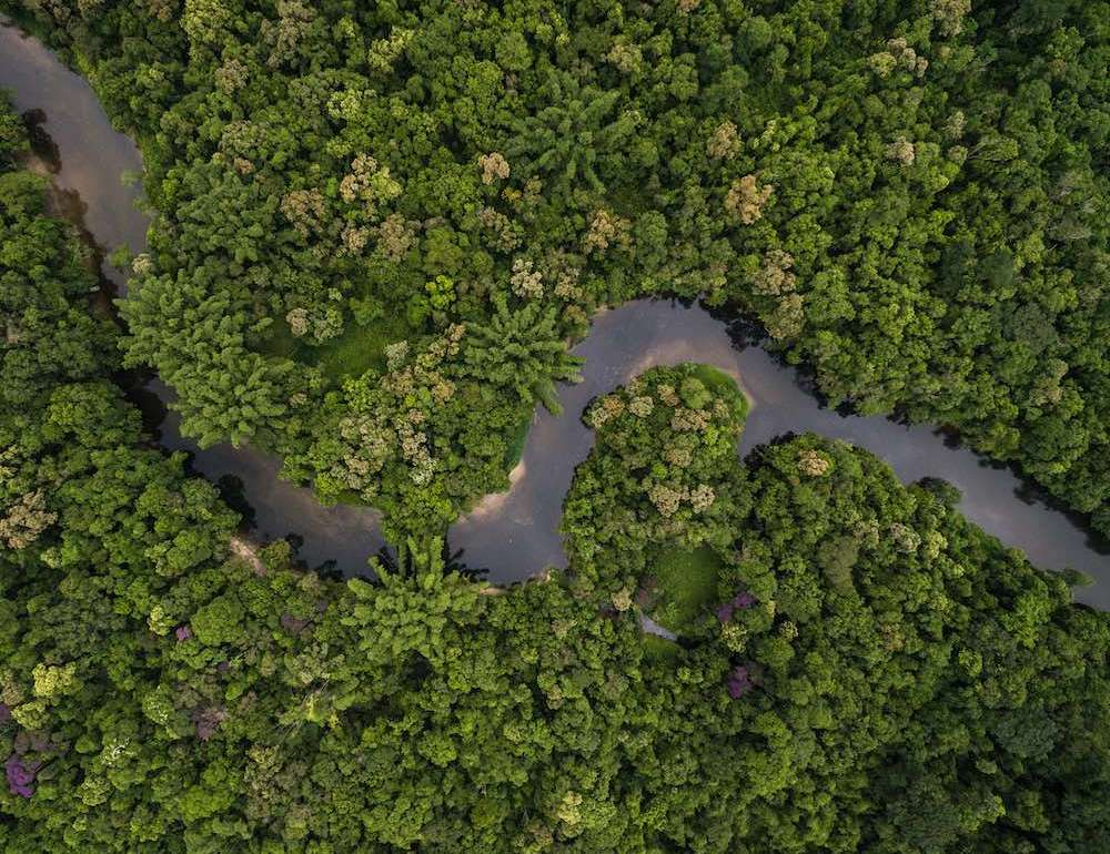 La reforestación puede ayudar a frenar el cambio climático - 1 Reforestación