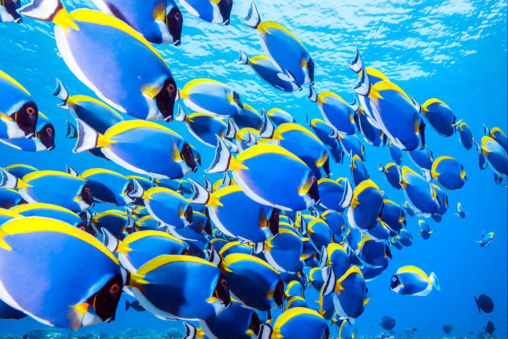 Los 8 mejores lugares del mundo para bucear - BuceoMundo_PORTADA_Maldivas