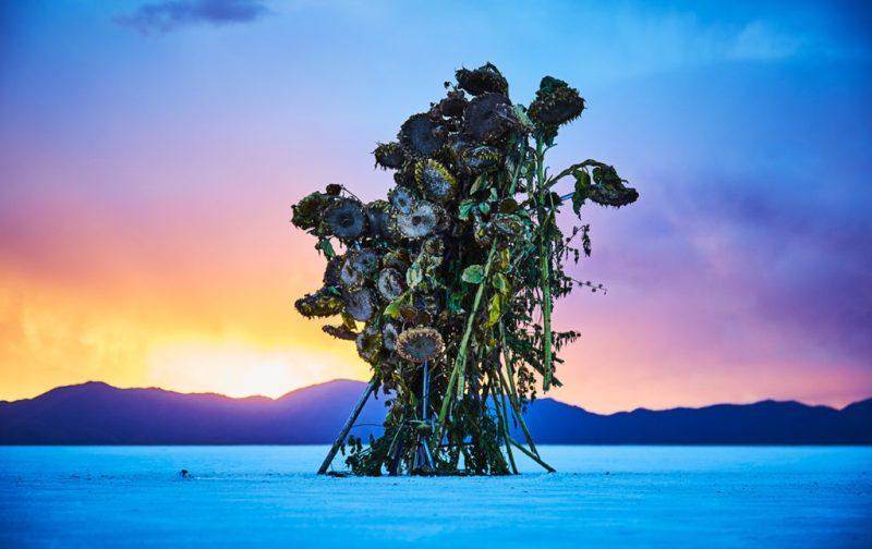 La elegancia exótica de Azuma Makoto - hotbook_azumamakoto_arte_instalacion_escultura_plantas_paisaje_cielo_colorido_argentina