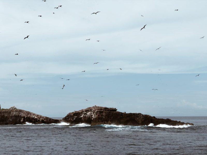 Isla Isabel, un paraíso en la costa de Nayarit - isla-isabel-pajaros
