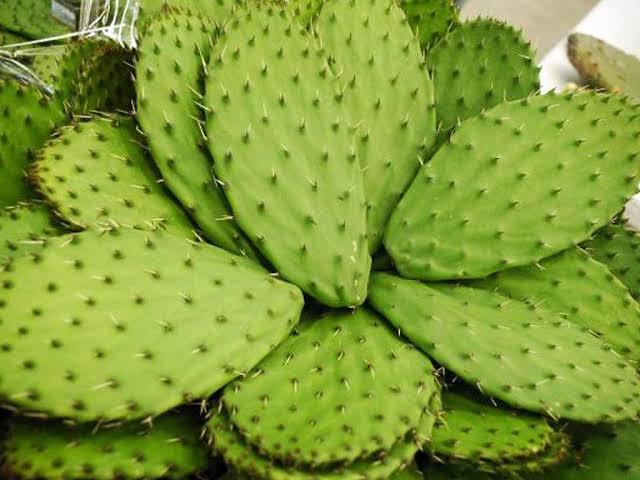 5 superfoods originarios de México - dieta-nopal