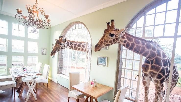 5 destinos imperdibles en África - giraffe-africa