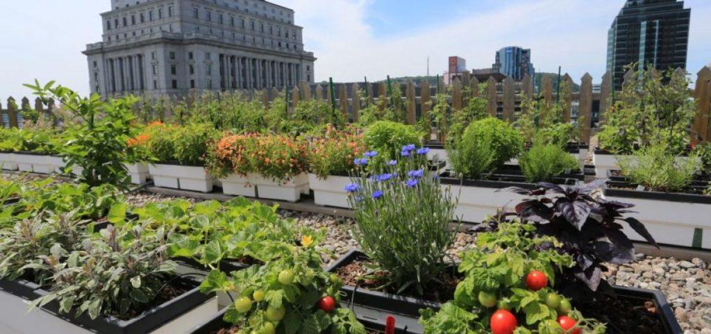 101: cómo crear tu propio huerto urbano - 101- Cómo crear tu propio huerto urbano portada-