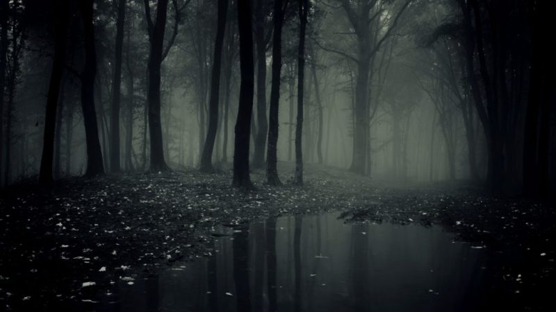 24 fotos que te transportarán a lugares inimaginables - bosque-negro-alemania-fotos-de-lugares-inimaginables-que-te-transportaran-virtualmente-coronavirus-internet-fotos-10