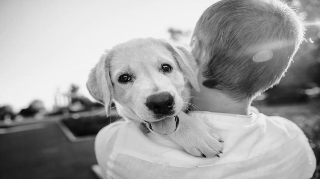 Perroomies, un compañero de vida - Portada Perromies coronavirus covid cuarententa perros mejor amigo del hombre