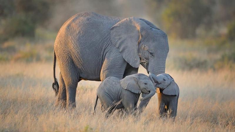 15 fotos que representan el cariño de mamá en la naturaleza - foto-elefante-fotos-que-representan-el-carincc83o-de-mama-en-la-naturaleza-zoom-dia-de-las-madres-10-de-mayo-coronavirus