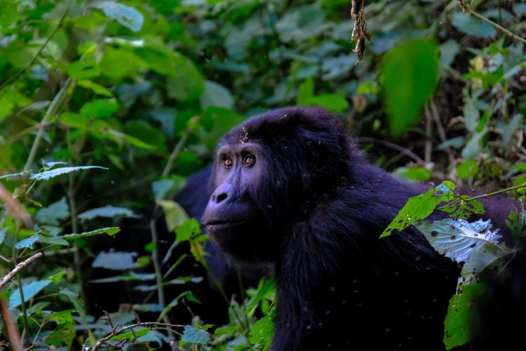 30 impactantes fotografías que te transportarán a lugares increíbles - uganda-foto-impactantes-lugares-alrededor-del-mundo-que-jamas-deberas-borrar-del-mapa-fotos-foodies-instagram-tiktok-online-coronavirus-covid-19