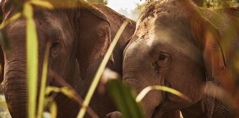 Conoce el hotel que te invita a dormir rodeado de elefantes - 1-1