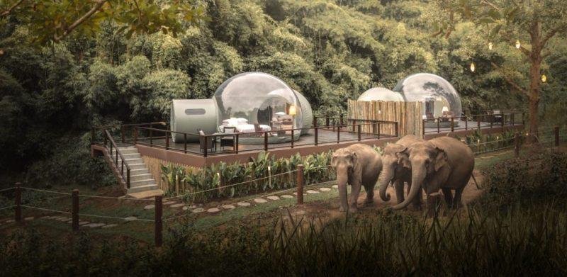 Conoce el hotel que te invita a dormir rodeado de elefantes - 3-1