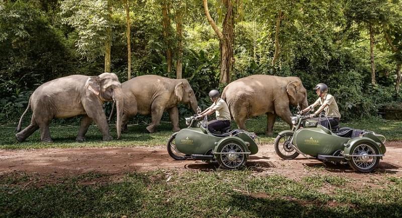Conoce el hotel que te invita a dormir rodeado de elefantes - 4-1