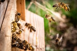 HOTBOOK Ecotalks x Tom's of Maine: la importancia de las abejas - kai-wenzel-dyGWrmJ_i4E-unsplash