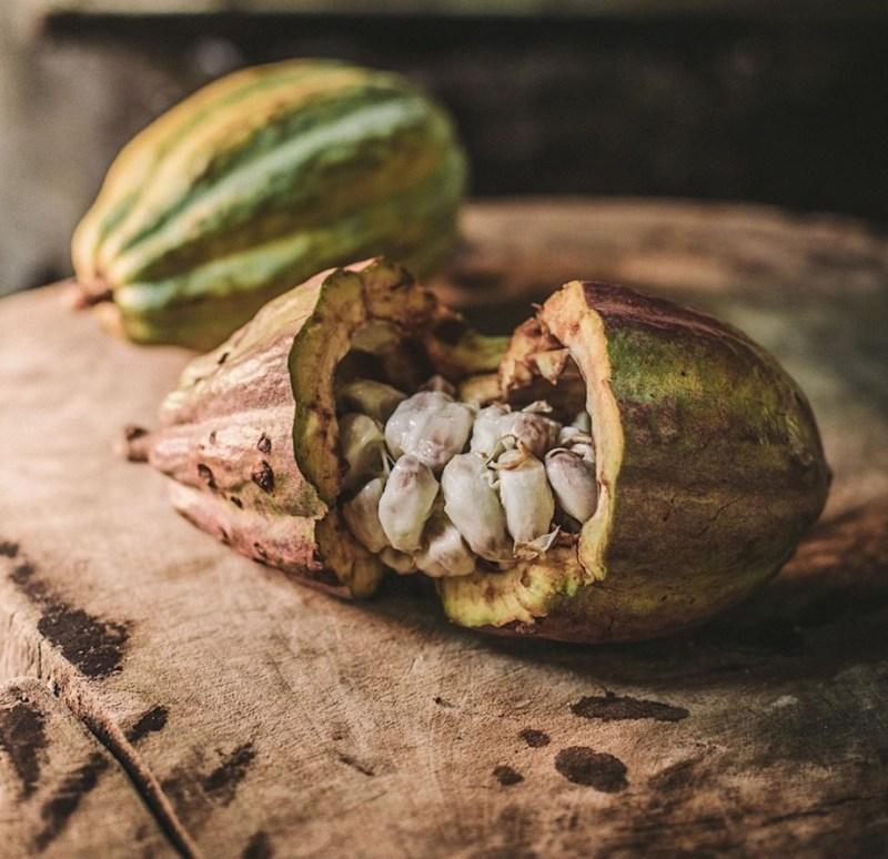 Culto Cacao, el imperdible chocolate orgánico mexicano - culto-cacao-el-imperdible-chocolate-organico-que-no-puedes-dejar-de-probar-chocolate-foodie-gourmet-food-instagram-amazon-tiktok-amazon-disney-netflix-google-tiktok-instagram-cacao-comida-receta-2