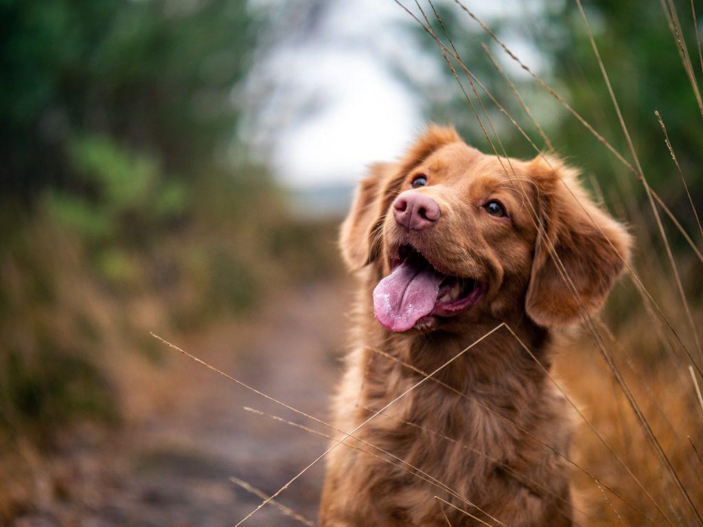 Recetas para consentir a tus mascotas - Portada Recetas para consentir a tus mascotas google perros google mascota dog puppy amazon recetas foodie Instagram tiktok amazon online google foto coronavirus