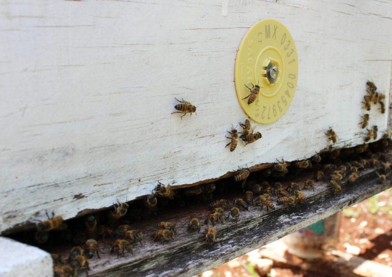 Muuk 'Kaab, la miel de abeja orgánica, sustentable y orgullosamente mexicana - mukab-la-miel-de-abeja-organica-sustentable-y-orgullosamente-mexicana-miel-honey-foodie-instagram-tiktok-google-amazon-miel-de-abeja-organica-mercado-libre-navidad-cena-de-navidad-ancc83o-nuev
