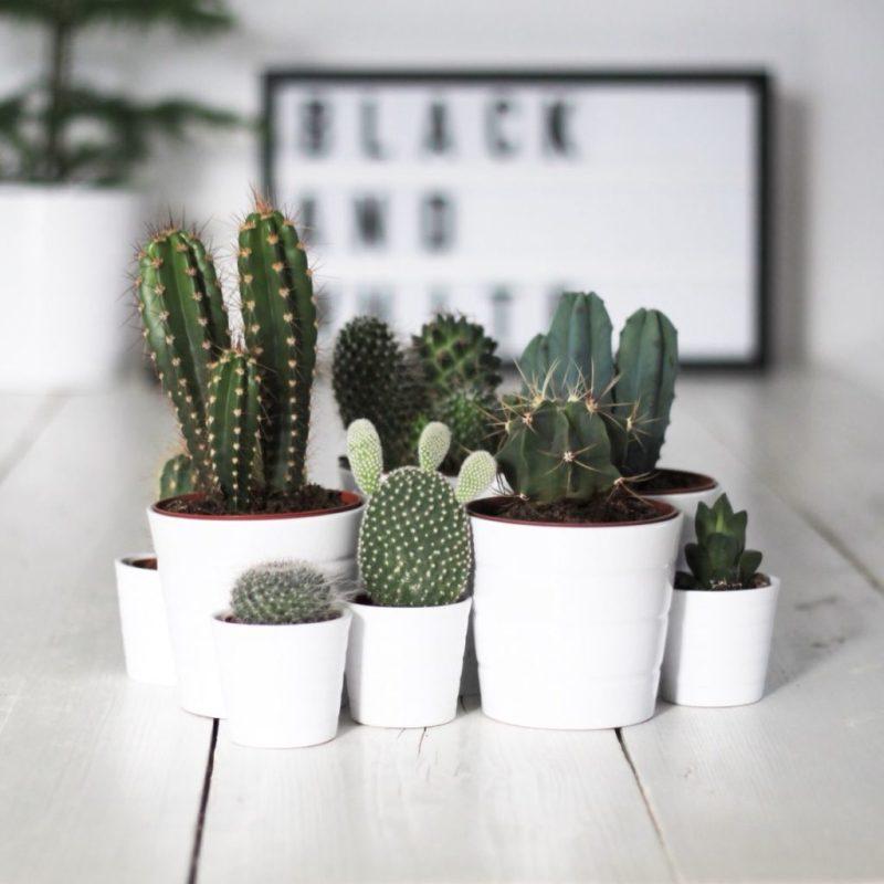 Go green! Plantas para tener un imperdible jardín interior - link-cactus-plantas-para-tener-un-imperdible-jardin-interior