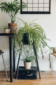 Go green! Plantas para tener un imperdible jardín interior - link-cinta-plantas-para-tener-un-imperdible-jardin-interior