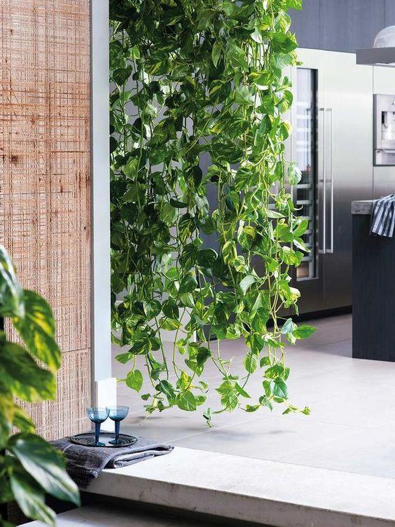 Go green! Plantas para tener un imperdible jardín interior - link-pothos-plantas-para-tener-un-imperdible-jardin-interior