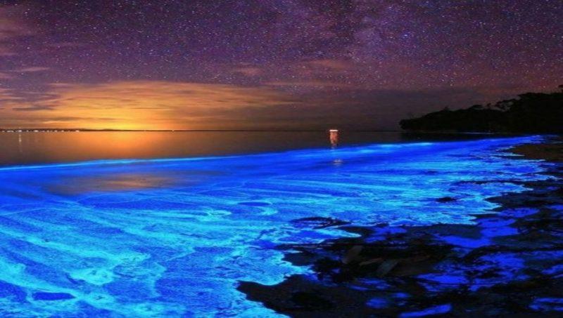 5 lugares en Puerto Escondido que necesitas conocer - laguna-manialtepec-bioluminiscente-5-lugares-en-puerto-escondido-que-necesitas-conocer-surf-semana-santa-vacacion