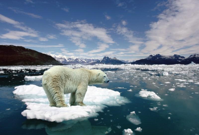 10 animales en peligro de extinción - animales_galeria02