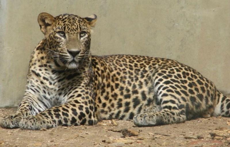 10 animales en peligro de extinción - extincion_03
