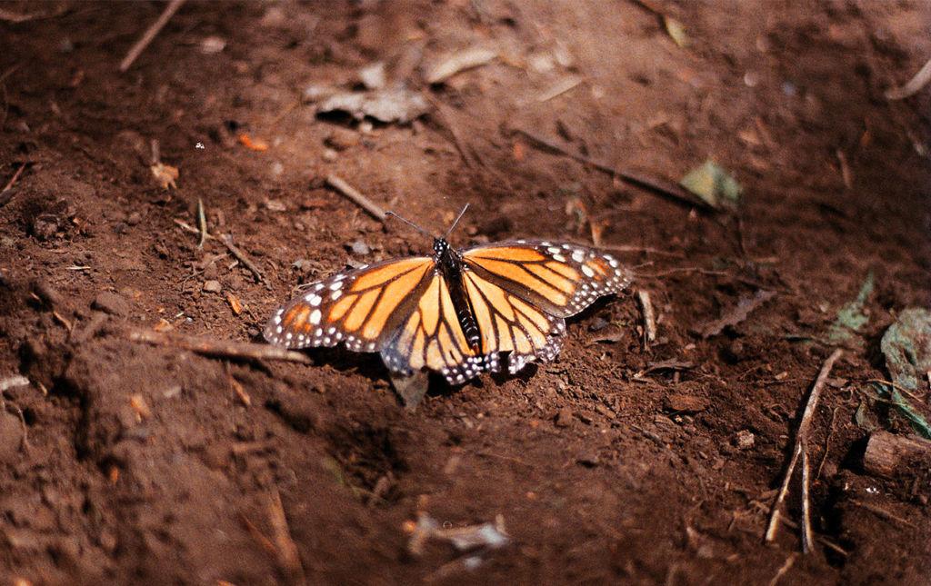 El efecto mariposa, monarcas sin corona, pero con mucho poder.