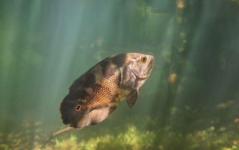 Ivan Mikolji - fish-photo-ivan-mikolji