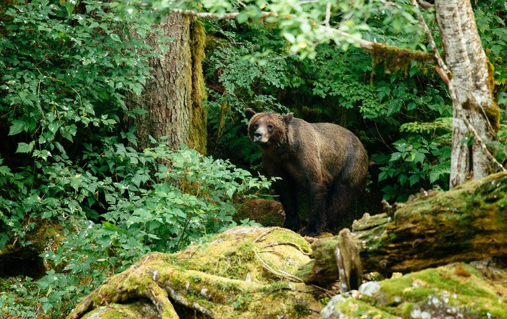 Bestiario Pardo, experiencias en los bosques del pacífico canadiense