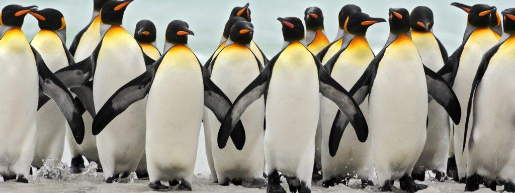Datos curiosos sobre los pingüinos