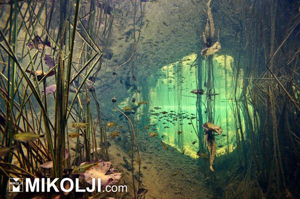 Expo Acuario: un evento a favor de las especies y los ecosistemas acuáticos
