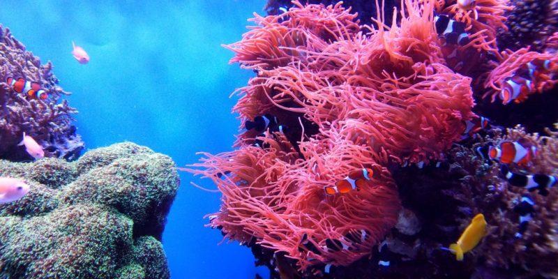 20 fotografías que te harán enamorarte del océano - fotografias-que-te-haran-enamorarte-del-oceano-google-fotos-google-zoom-online-google-meet-instagram-naturaleza-animales-en-peligro-de-extincion-oceano-cuidado-por-el-oce-12
