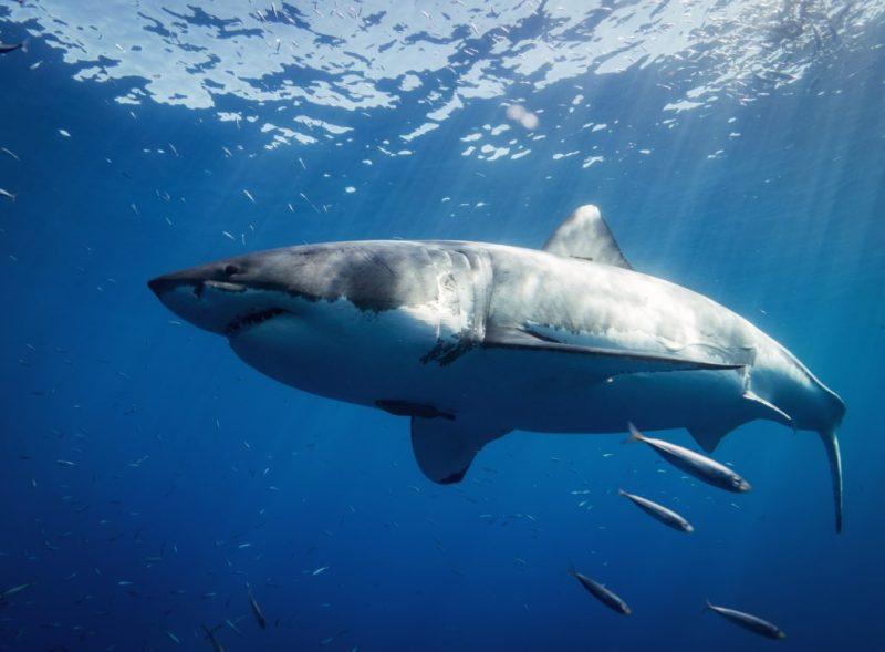20 fotografías que te harán enamorarte del océano - fotografias-que-te-haran-enamorarte-del-oceano-google-fotos-google-zoom-online-google-meet-instagram-naturaleza-animales-en-peligro-de-extincion-oceano-cuidado-por-el-oce-15